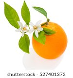 Orange Fruit With Green Leaves...