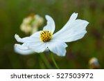 single white flower | Shutterstock . vector #527503972