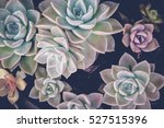 close up of agave succulent... | Shutterstock . vector #527515396