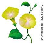 morning glory flower in yellow...   Shutterstock .eps vector #527534542