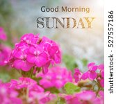 Small photo of Good morning Sunday over blur flower background with sun light