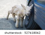 Little Lost Sheep Sitting At...