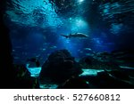 Shark And Fishes Underwater In...