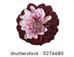 single purple flower isolated... | Shutterstock . vector #5276680