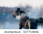 Black Horse Winter Portrait In...