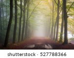 autumn colors in the mist. a... | Shutterstock . vector #527788366