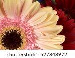 gerbera flower petals closeup... | Shutterstock . vector #527848972