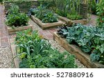 Childrens Edible Vegetable Garden - Fine Art prints