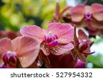 Close Up Of An Orchid Flower I...