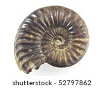 Ammonite Fossil isolated on a white background - stock photo