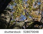 Small photo of Shade tree