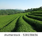 tea farm on mountain. | Shutterstock . vector #528158656