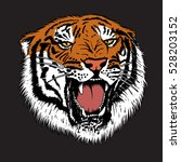 Angry Tiger Is Growling...
