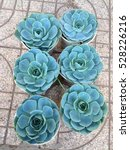 green round llower | Shutterstock . vector #528226216