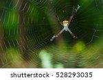 Spiders Argiope Versicolor ...