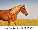 horse with long mane portrait... | Shutterstock . vector #528302998