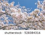 sakura blossoms in tokyo ...   Shutterstock . vector #528384316