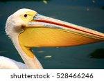 Close Up Of Pelican Beak  ...