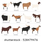 goat breeds icon set. animal... | Shutterstock .eps vector #528479476
