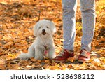 Stock photo woman walking with cute dog in park 528638212