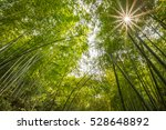 bamboo forest in bright sunlight | Shutterstock . vector #528648892