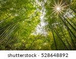 bamboo forest in bright sunlight | Shutterstock . vector #528648892