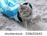 Stock photo cute cat playing with game tunnel on carpet at home 528652642