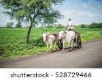 indian farmer riding bullock...   Shutterstock . vector #528729466