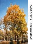 park alley in autumn city park | Shutterstock . vector #528791092