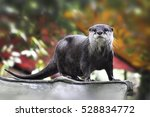 Cute otter in the garden