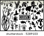 collection  of vector leaf...   Shutterstock .eps vector #5289103