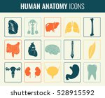 human internal organs. anatomy... | Shutterstock .eps vector #528915592