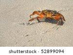 Walking Crab