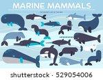 sea mammals animal collection... | Shutterstock .eps vector #529054006