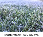 Green Grass With Morning Frost...