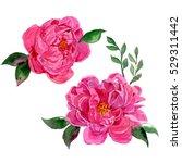 watercolor peony flowers set | Shutterstock . vector #529311442