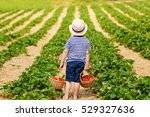 happy adorable little kid boy... | Shutterstock . vector #529327636