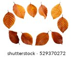 Dry Leaves Background Isolated...
