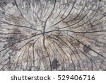 Old Tree Stump Texture...