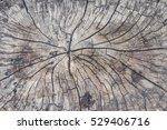 Old Tree Stump Texture...