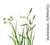 watercolor drawing green grass...   Shutterstock . vector #529441912