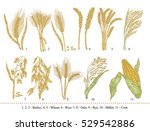 cereal set. hand drawn barley ... | Shutterstock . vector #529542886
