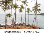 palm tropical beaches. mirissa... | Shutterstock . vector #529546762