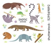 exotic animals. vector... | Shutterstock .eps vector #529569892