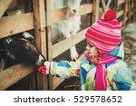 Little Girl Feeding Sheeps At...