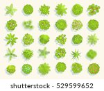 trees top view. different... | Shutterstock .eps vector #529599652