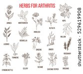 herbs to fight arthritis ... | Shutterstock .eps vector #529619908