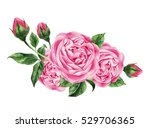bouquet of lush pink roses ... | Shutterstock . vector #529706365