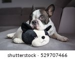 French Bulldog Lying With His...