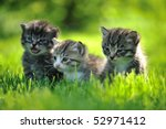 Stock photo three striped kittens sitting in the grass 52971412